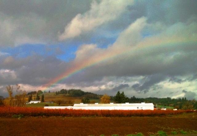 rainbow Nov 7a